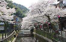城崎温泉街並み(春)
